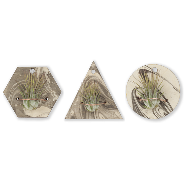 Marbled Air Plant Wall Hangers Image 1
