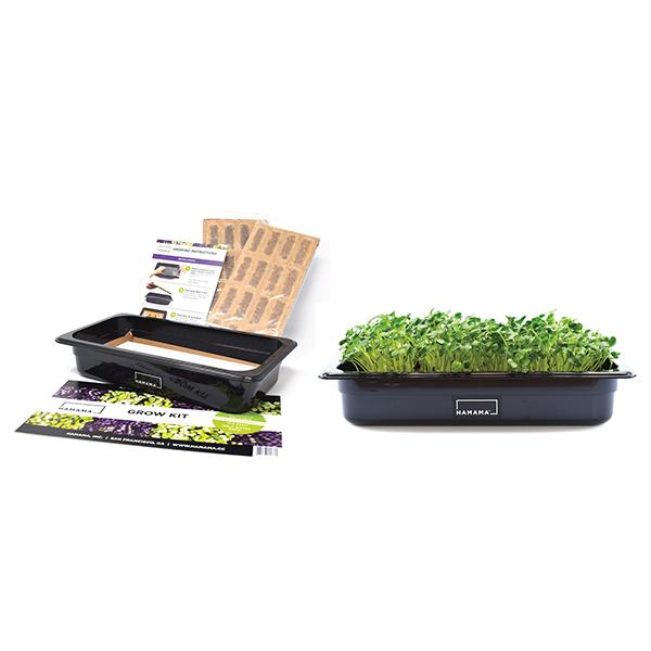 Microgreens Grow Kit Image 1