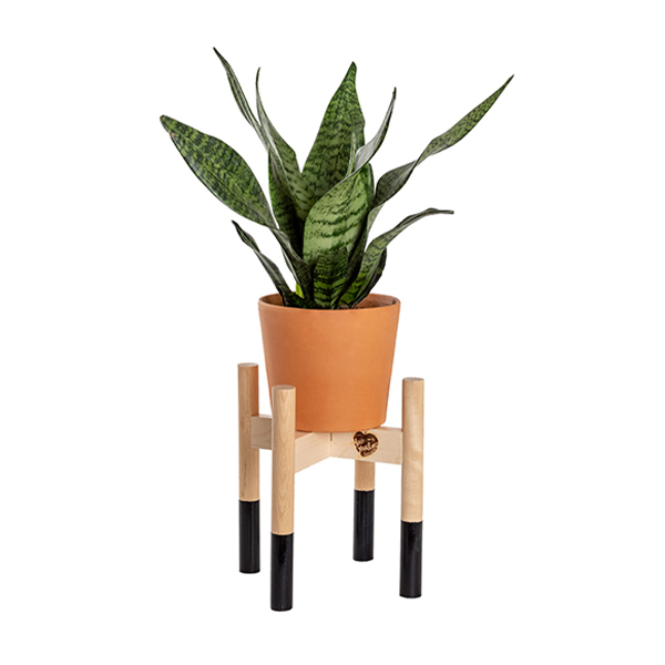 Modern Wood Plant Stand Image 1